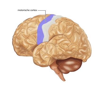 Somatosensorisch
